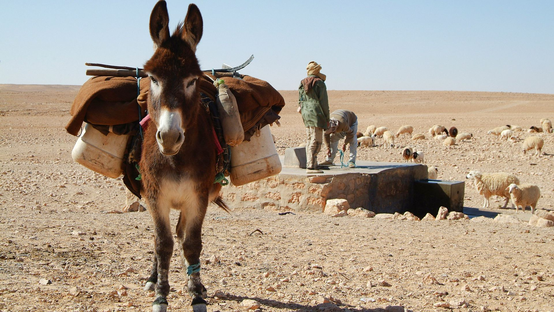 Mietwagen Tunesien